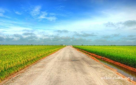paddy-field-view-at-sekinchan-9