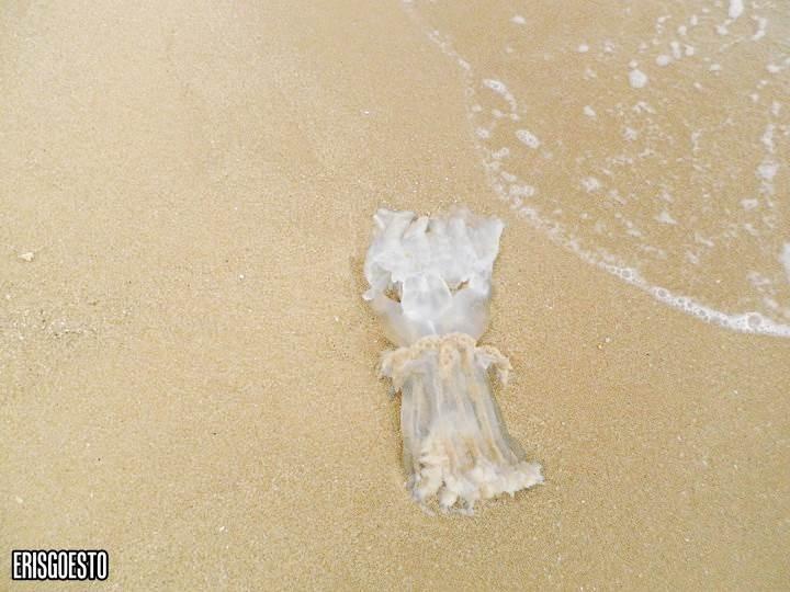 deadjellyfish